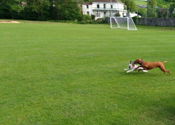 Hooper Sooper Pooper Scooper & Dogs Incl George (11)