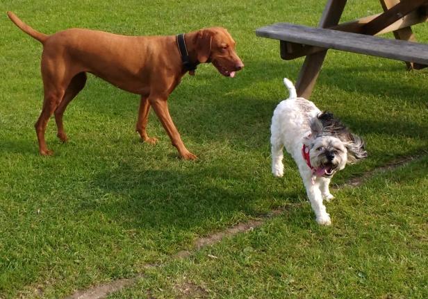 Hooper Sooper Pooper Scooper & Dogs Incl George (13)