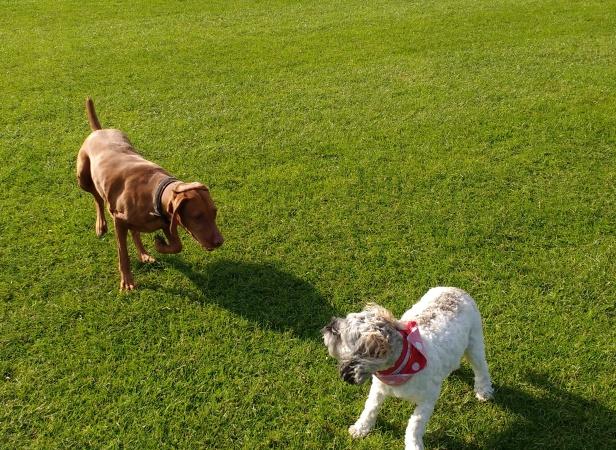Hooper Sooper Pooper Scooper & Dogs Incl George (15)