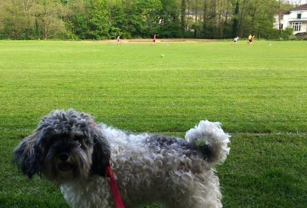 Tisbury Sports & Social Club (25)